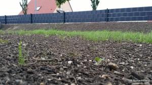 Gras wird saftig