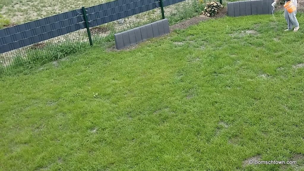 Rasenfläche weißt nur geringe Lücken auf