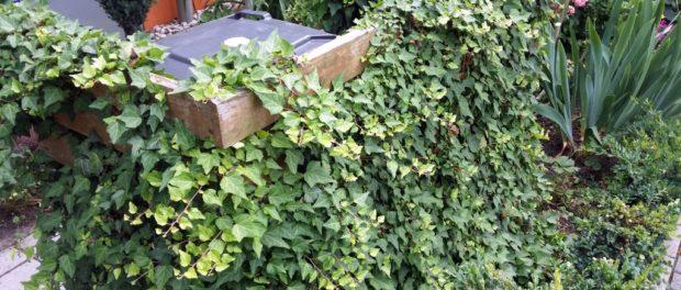 Mülltonnenverkleidung mit Pflanzen bewachsen