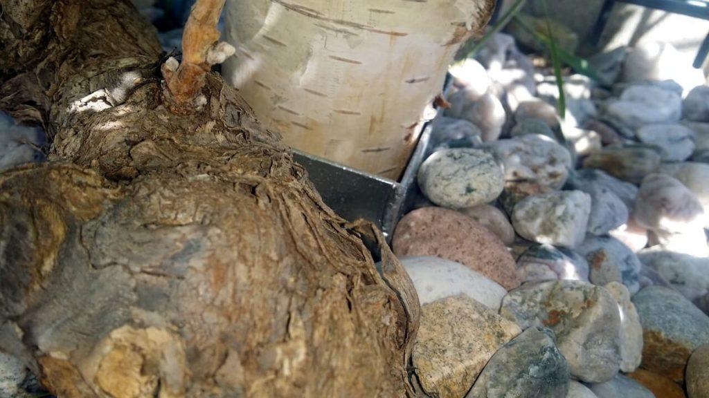 Holzpflock steckt in Bodenhülse